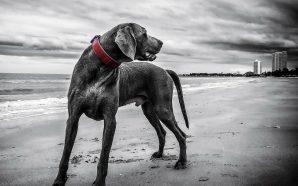 Jak pielęgnować sierść psa?
