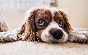 Pielęgnacja psiej sierści na każdego dnia – na co zwrócićuwagę?